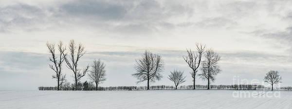 Treeline In Snow, England Poster