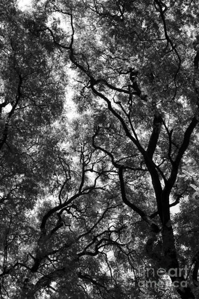 Trees In Park Poster