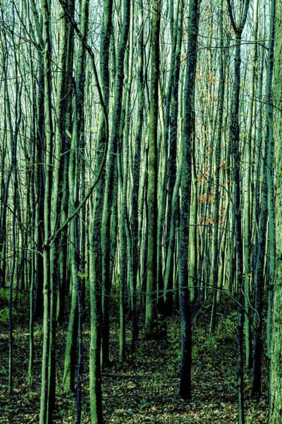 Treez Green Poster