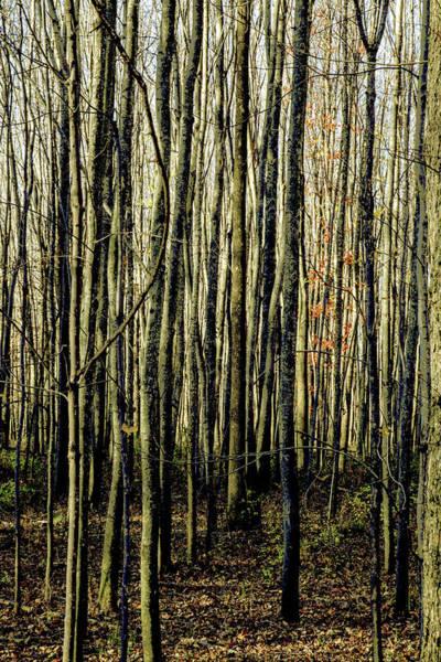 Treez Yellow Poster