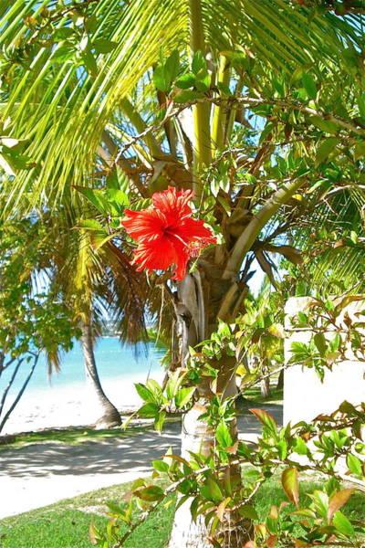 Tropical Spring Flower Poster