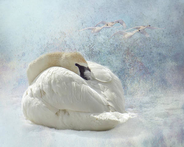 Poster featuring the photograph Trumpeter Textures #1 - Swan Feather by Patti Deters
