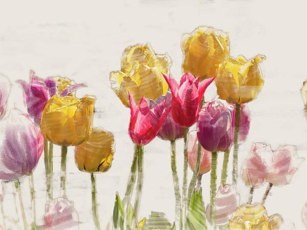 Tulipe Poster