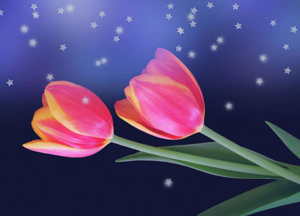 Tulips And Stars Poster