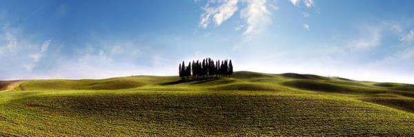 Tuscan Cypress Tree Poster