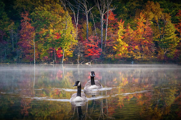 Two Canadian Geese Swimming In Autumn Poster