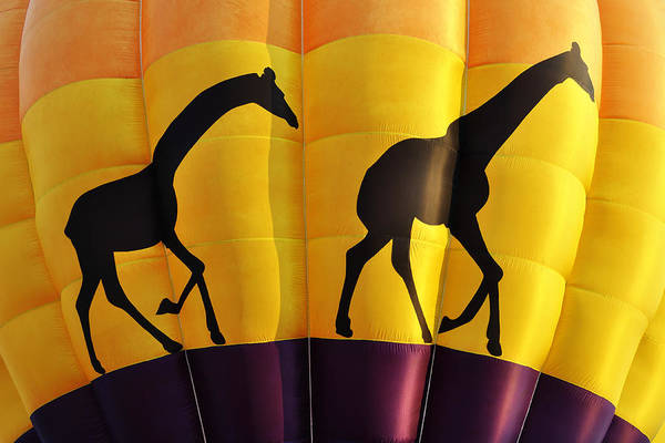 Two Giraffes Riding On A Hot Air Balloon Poster