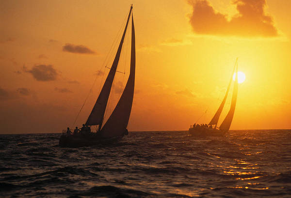 Two Sailboats Silhouetted Poster