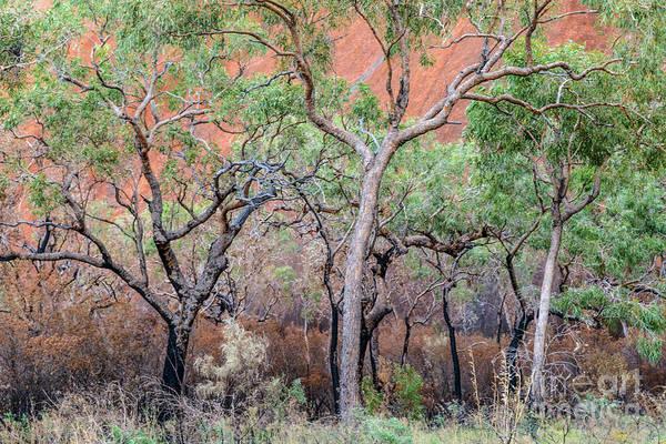 Uluru 05 Poster