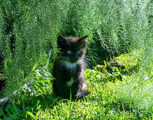 Kitten Under The Asparagus Ferns Poster