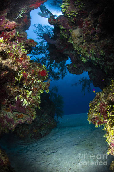 Underwater Crevice Through A Coral Poster