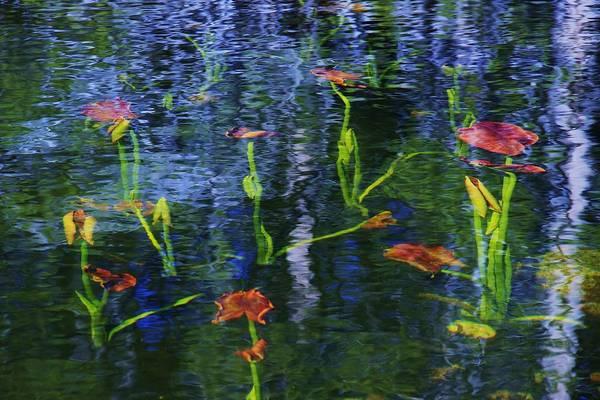 Underwater Lilies Poster