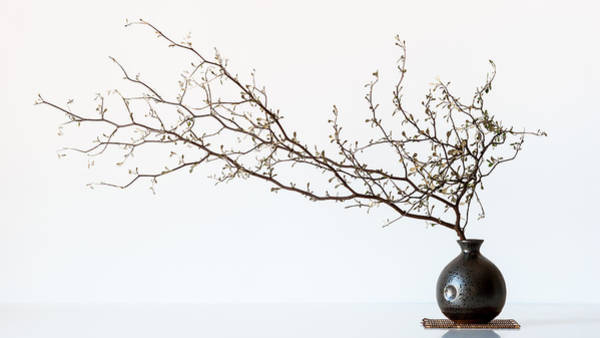 Vase And Branch Poster