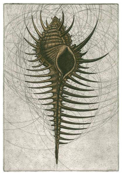 Venus Comb Murex Poster