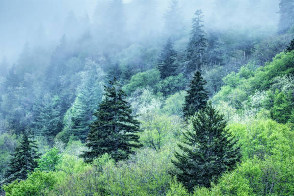 Verdant Forest In The Great Smoky Mountains Poster