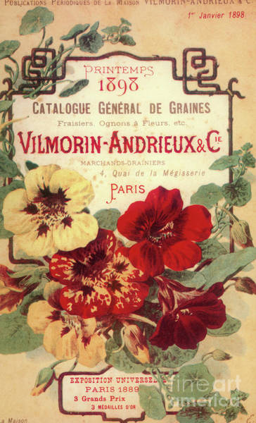 Vintage Flower Seed Cover Paris Rare Poster
