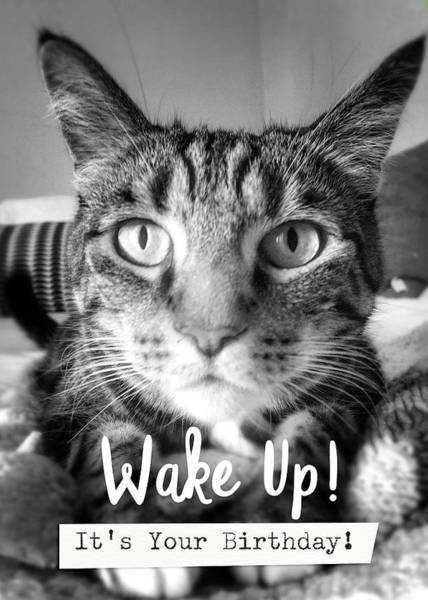 Wake Up It's Your Birthday Cat- Art By Linda Woods Poster