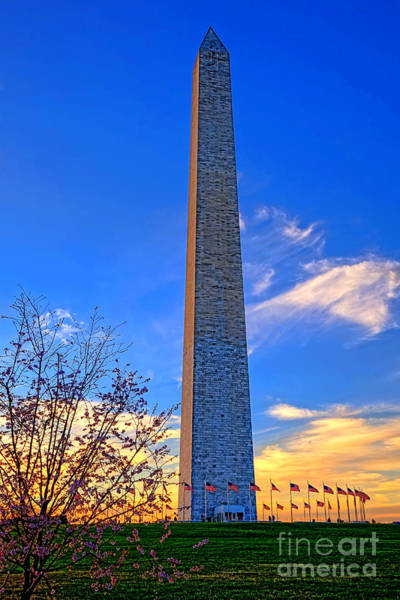 Washington Monument And Cherry Tree  Poster