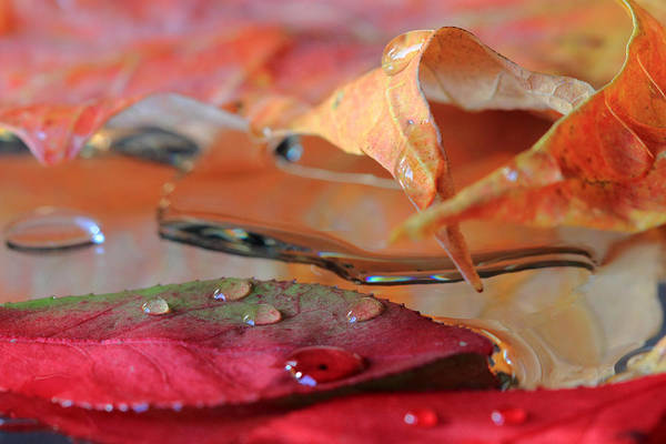 Water Drops On Autumn Leaves Poster