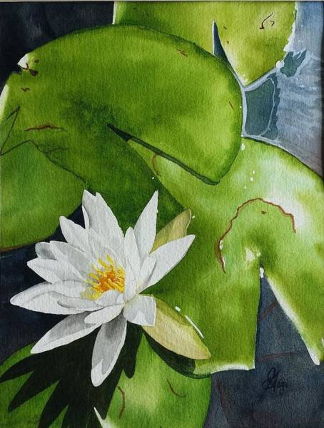 Poster featuring the painting Water Lilly by Gigi Dequanne