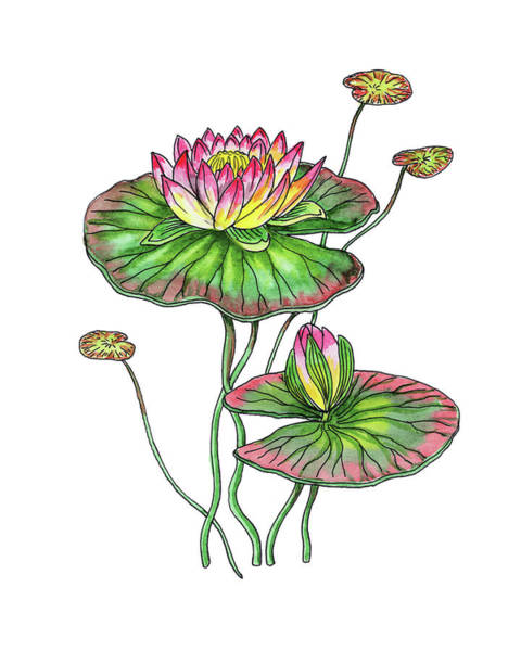 Water Lily Botanical Watercolor  Poster