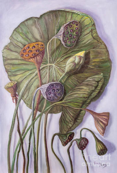 Water Lily Seed Pods Framed By A Leaf Poster