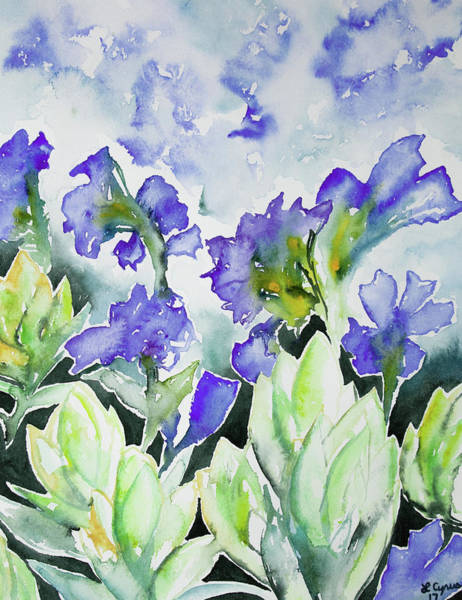 Watercolor - Rocky Mountain Wildflowers Poster
