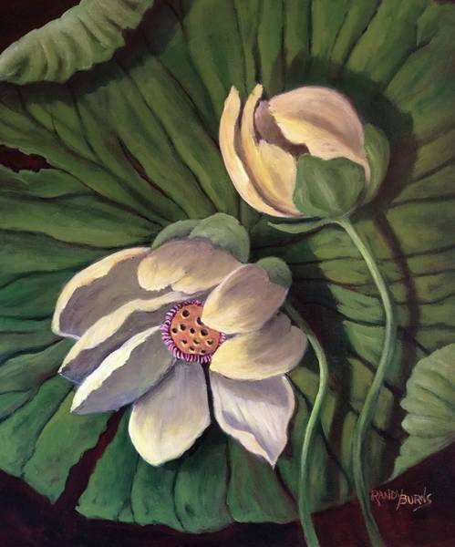 Waterlily Like A Clock Poster