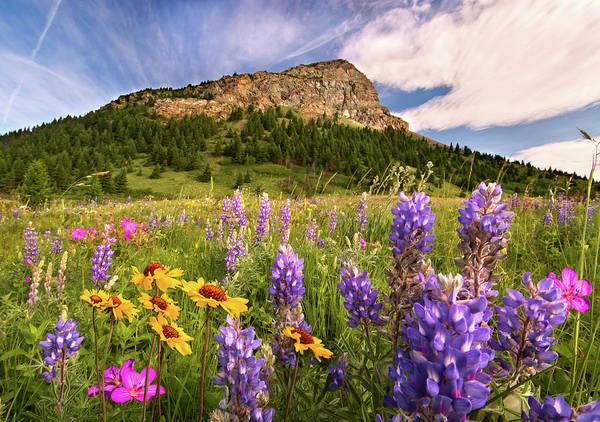 Waterton Wildflowers Poster