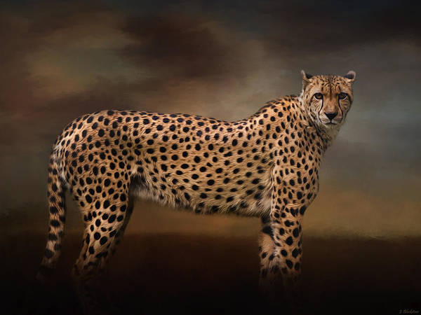 What You Imagine - Cheetah Art Poster