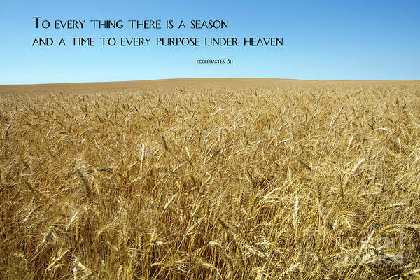 Wheat Field Harvest Season Poster