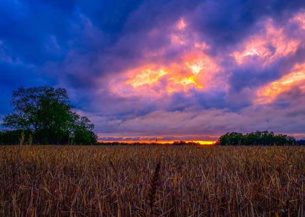 Wheat Field Sunset Poster