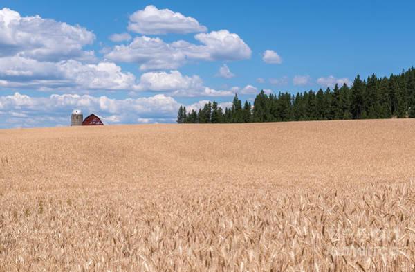 Wheat Fields Poster
