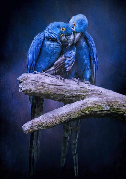 When I'm Feeling Blue Poster