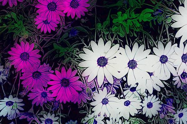 White And Purple Daisy Flower Poster