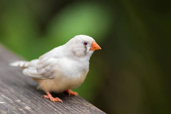 White Bird Standing On Deck Poster