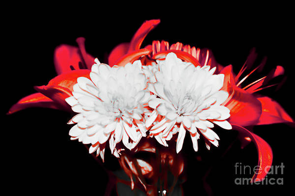 White Mums And Red Lilies Poster