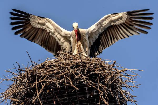 White Storks Of Fagagna 7 Poster