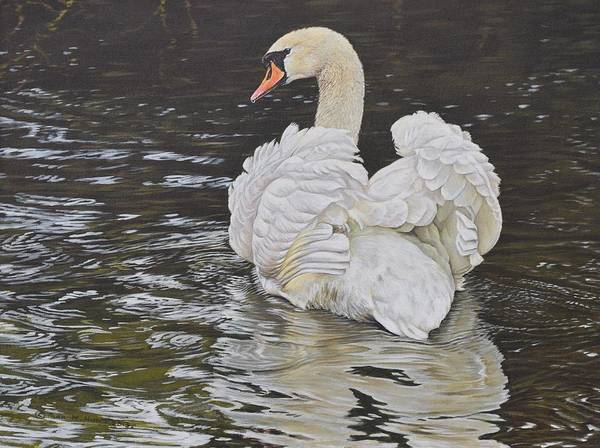 Poster featuring the painting White Swan by Alan M Hunt