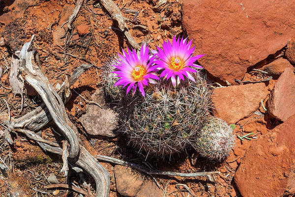 Wild Eyed Cactus Poster