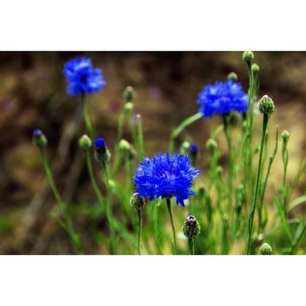 Wild Flower Beauty 3 #flowers #france Poster