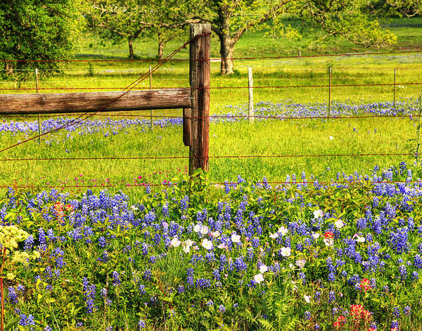 Wild Flowers And A Fence Poster