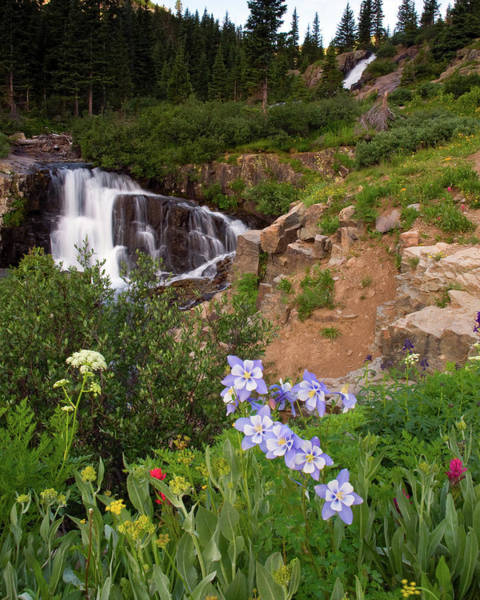 Wild Flowers And Waterfalls Poster