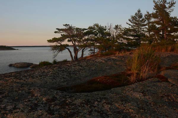 Wild Grass At Sunset - Georgian Bay Poster