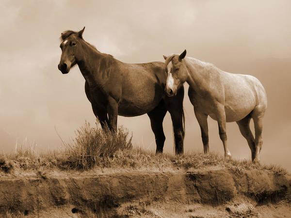 Wild Horses In Western Dakota Poster