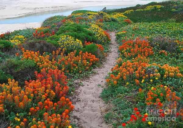 Wildflower Path At Ribera Beach Poster