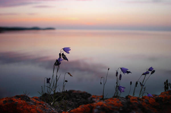 Wildflowers Over Lake Superior Poster