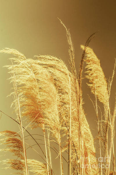 Windswept Autumn Brush Grass Poster