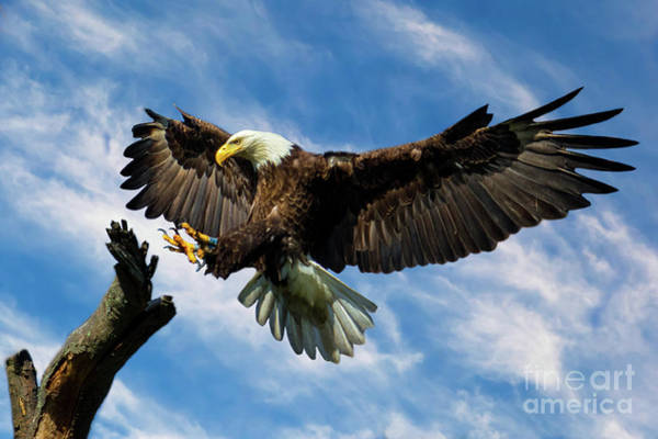 Wings Outstretched Poster
