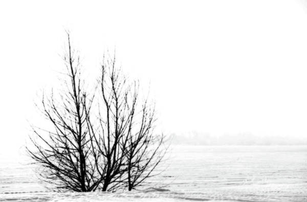Winter Bones Poster